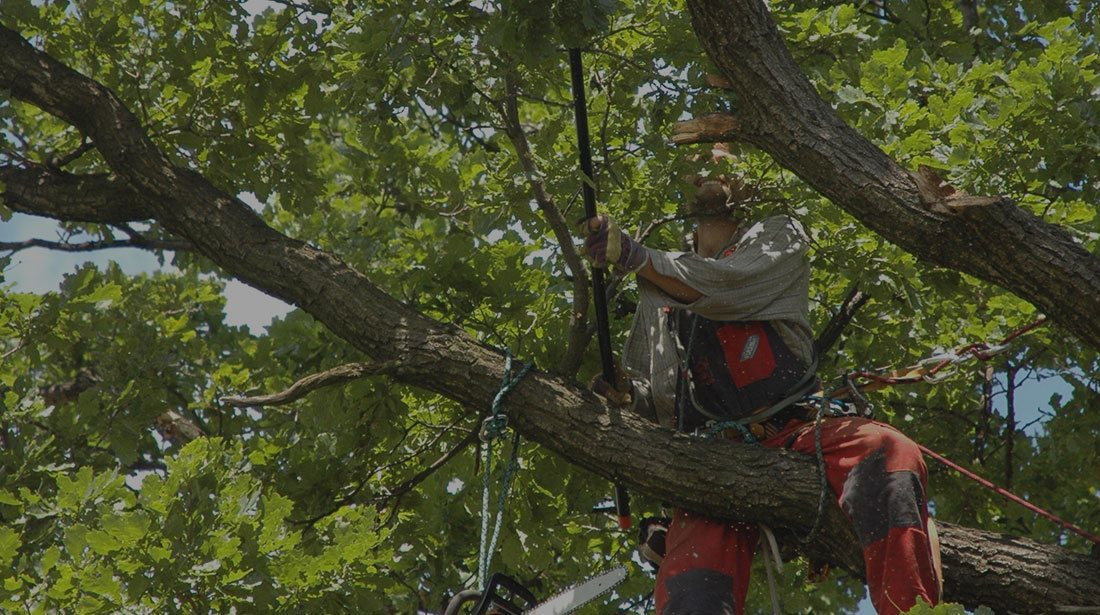 ASAP Complete Tree Service And Landscape Design: Tree cabling and bracing in West Palm Beach, Boca Raton and Wellington