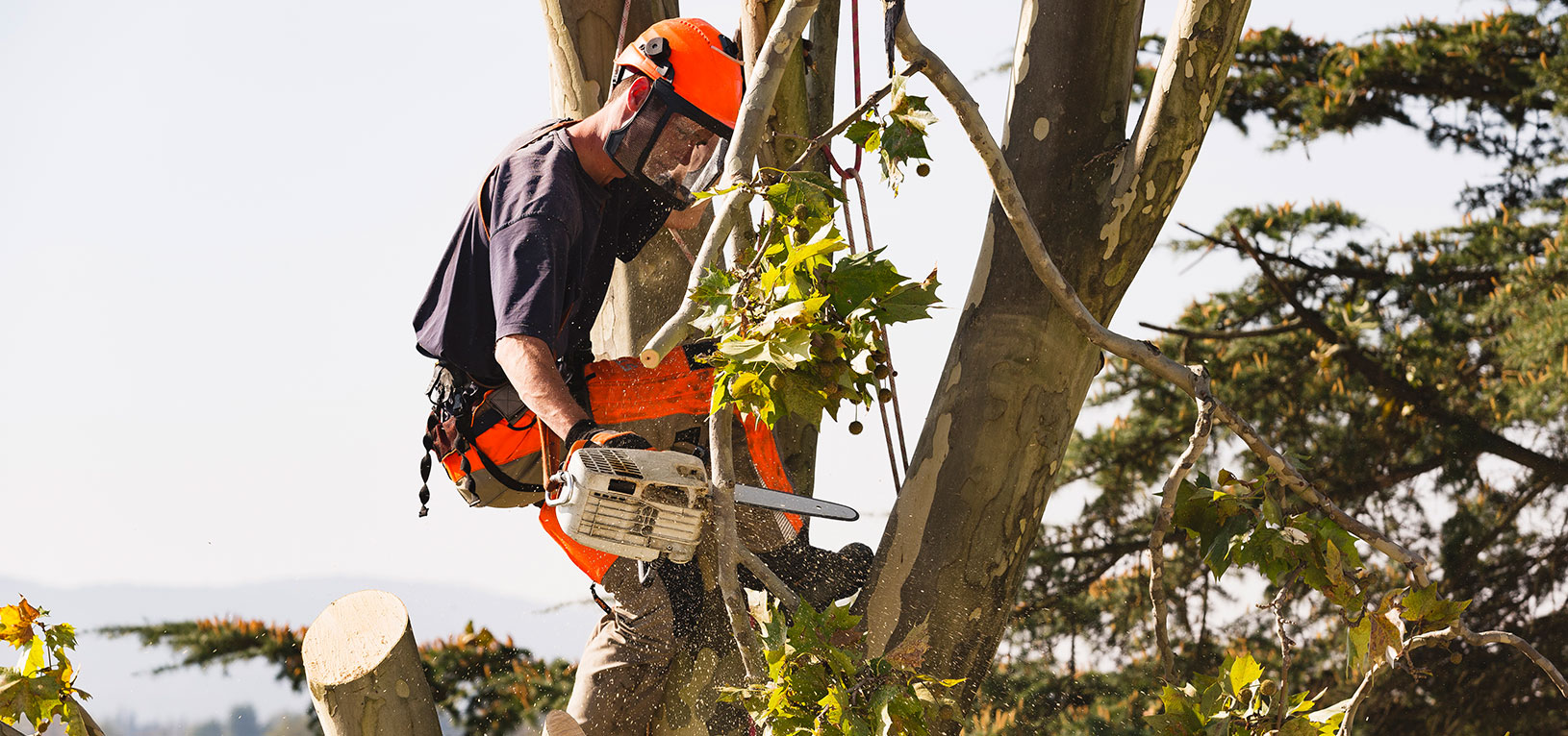 Boca Raton Tree Removal, Tree Trimming and Stump Grinding